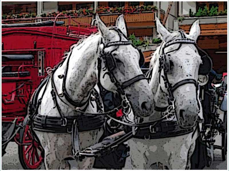 Publican la guía sobre bienestar de équidos en coches de caballos
