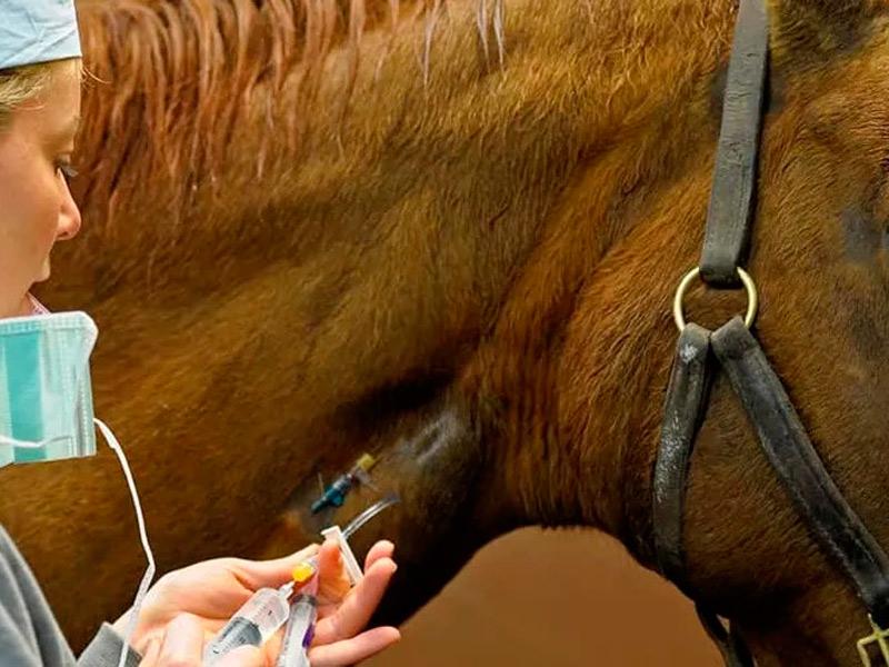 Coronavirus: Consejos para el cuidado de équidos durante el estado de alarma