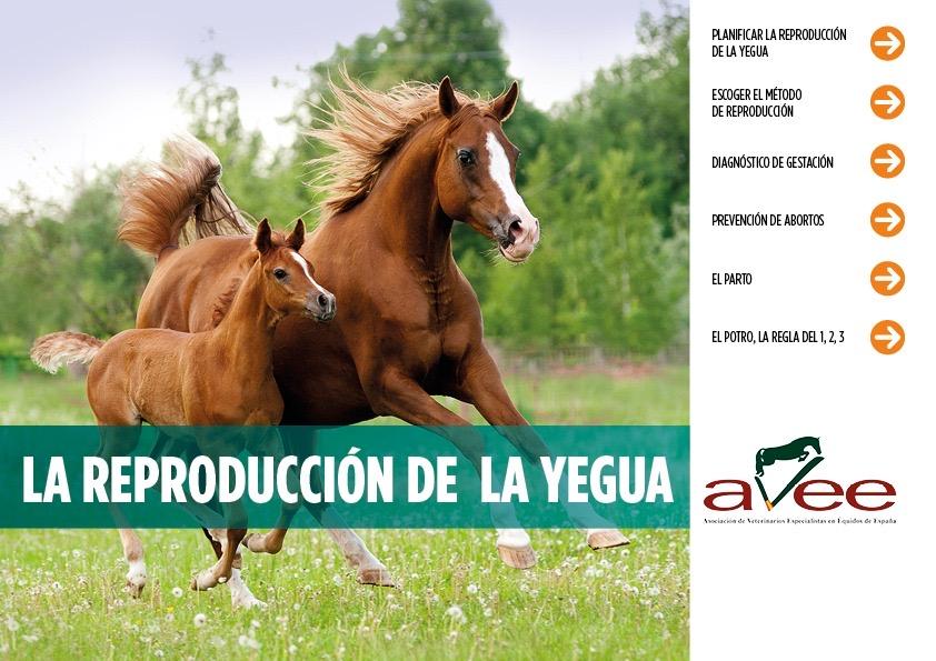 guía de consejos de reproducción equina asociación de veterinarios avee