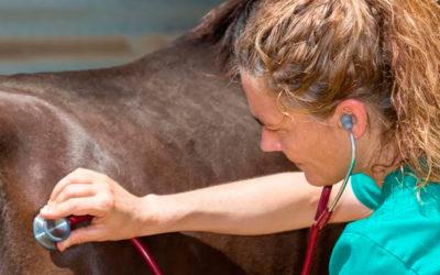 Publican la guía de buenas prácticas en examen de compraventa o precompra de caballos