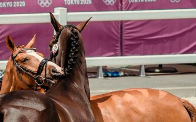 Denuncian que fisioterapeutas no veterinarios trataron caballos en los JJOO de Tokio